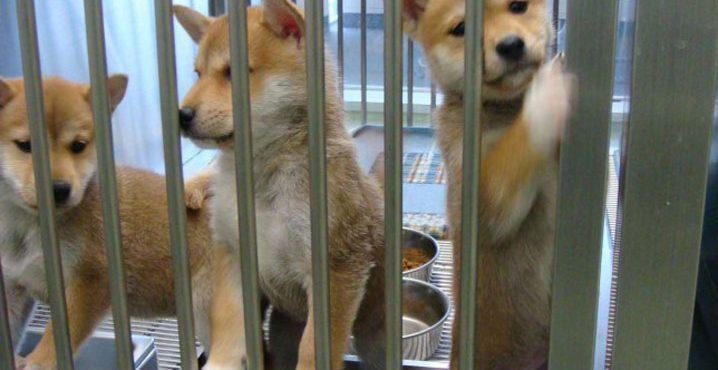 犬猫を年間10万匹殺している日本が殺処分ゼロを達成するための方法
