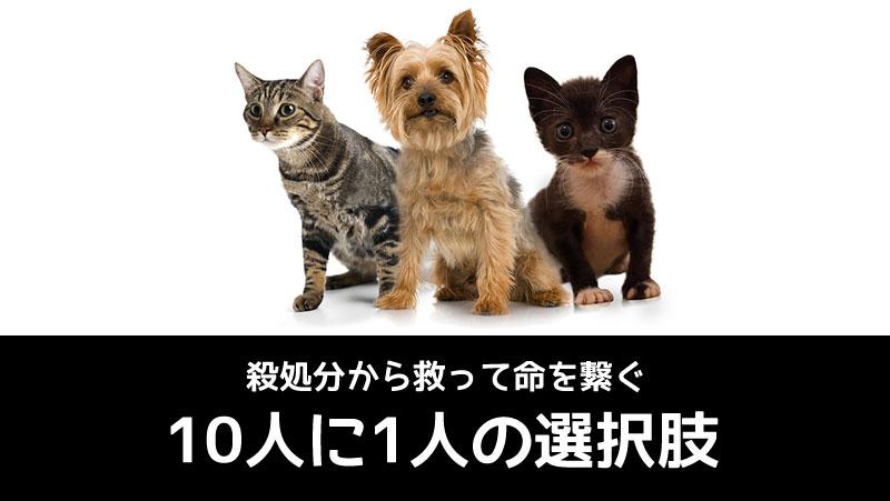 殺処分から犬猫を救う「10人に1人の選択肢」