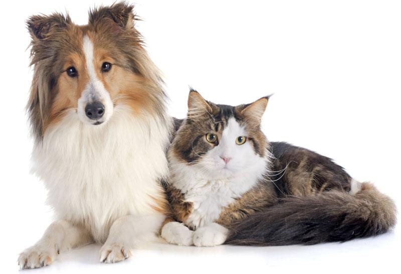 青森県のペットショップと保健所で殺処分される犬猫の数