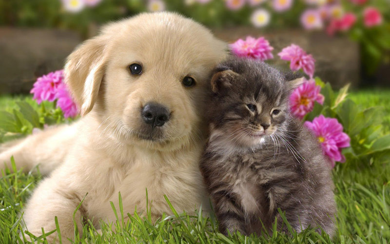 岩手県のペットショップと保健所で殺処分される犬猫の数
