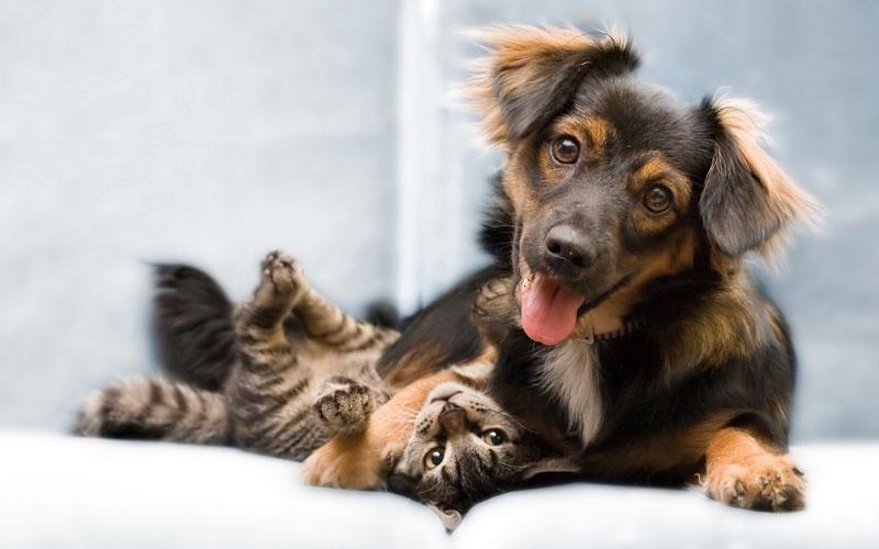 秋田県のペットショップと保健所で殺処分される犬猫の数