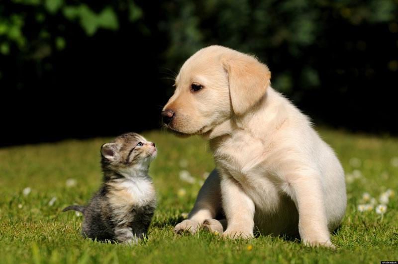 宮城県のペットショップと保健所で殺処分される犬猫の数