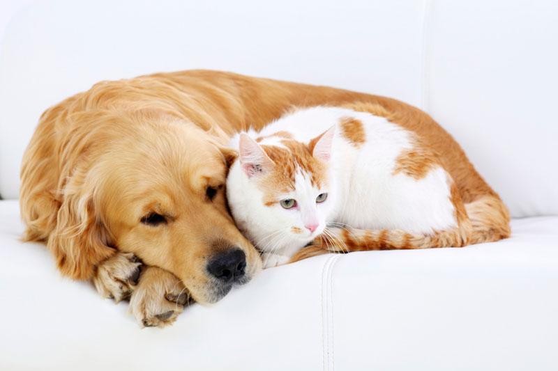 茨城県のペットショップと保健所で殺処分される犬猫の数