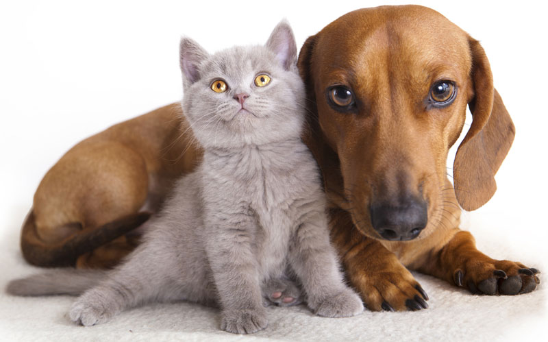 栃木県のペットショップと保健所で殺処分される犬猫の数