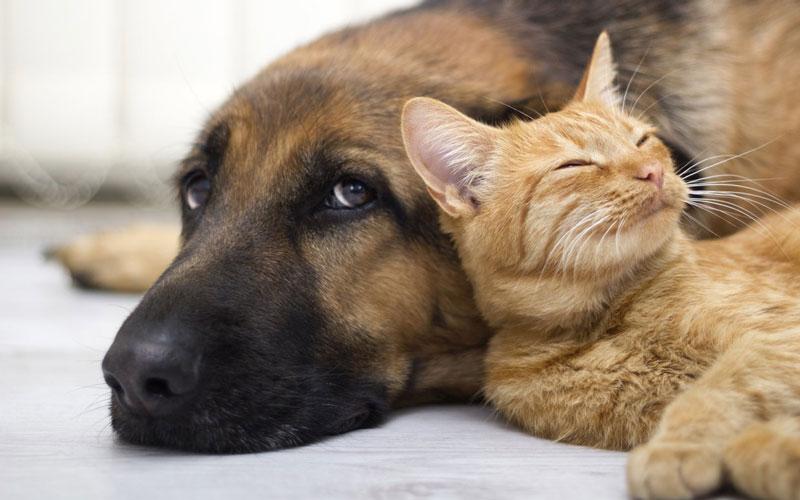 山形県のペットショップと保健所で殺処分される犬猫の数