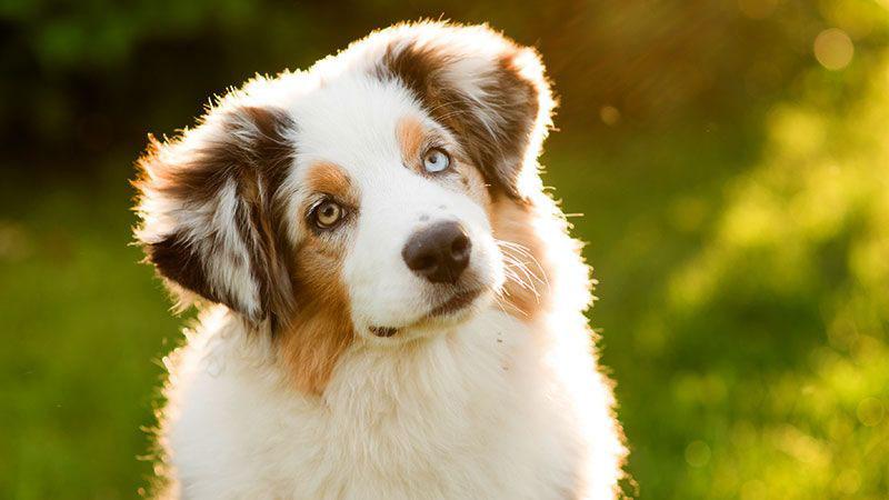 埼玉県のペットショップと保健所で殺処分される犬猫の数