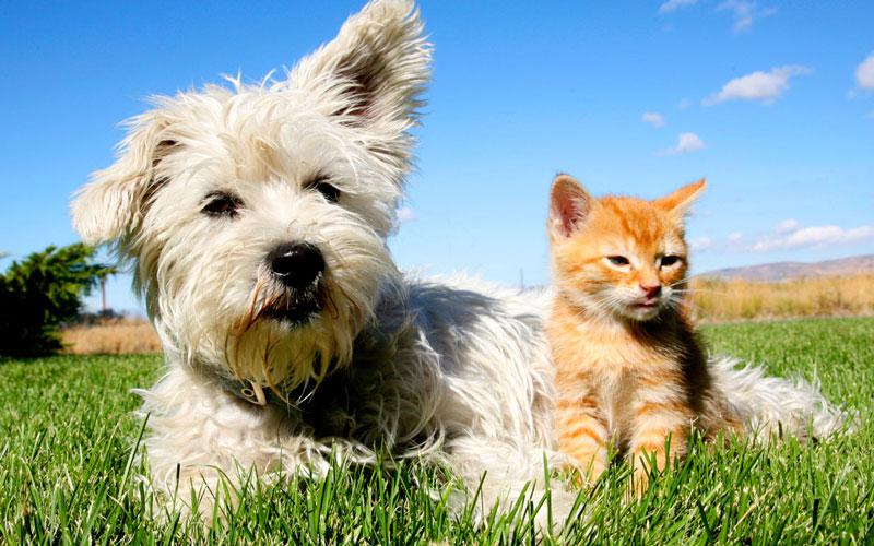 群馬県のペットショップと保健所で殺処分される犬猫の数