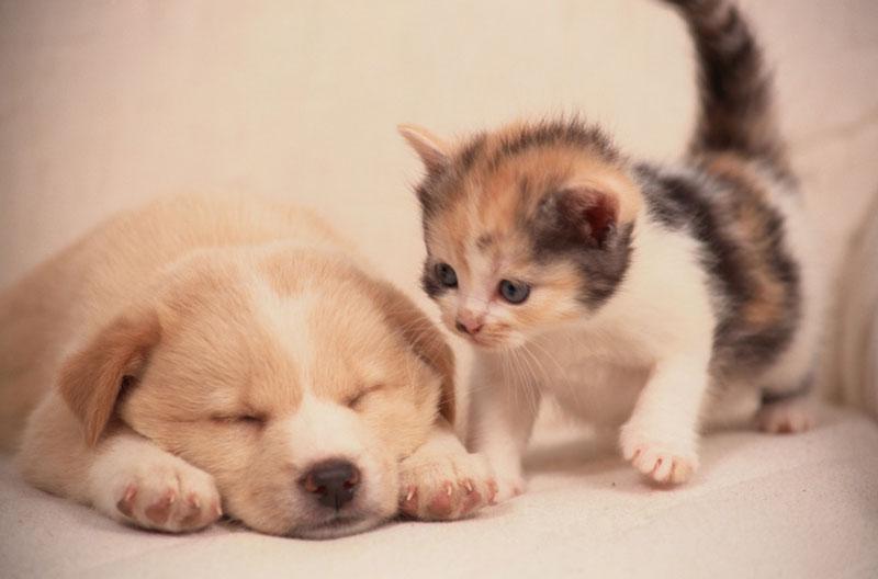 犬や猫を保護する動物愛護ボランティア団体