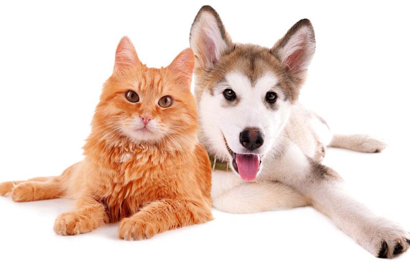 千葉県のペットショップと保健所で殺処分される犬猫の数