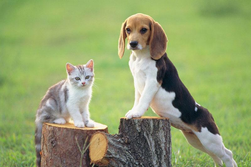 東京都のペットショップと保健所で殺処分される犬猫の数