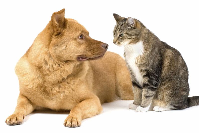 神奈川県のペットショップと保健所で殺処分される犬猫の数