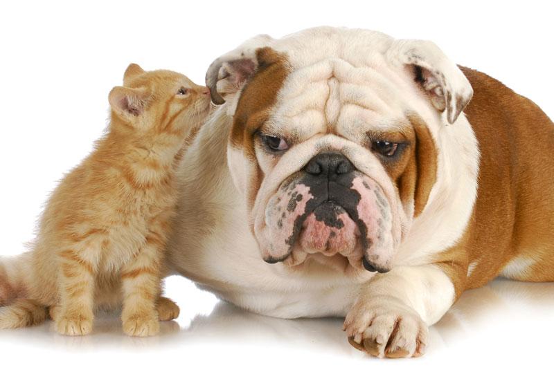 新潟県のペットショップと保健所で殺処分される犬猫の数