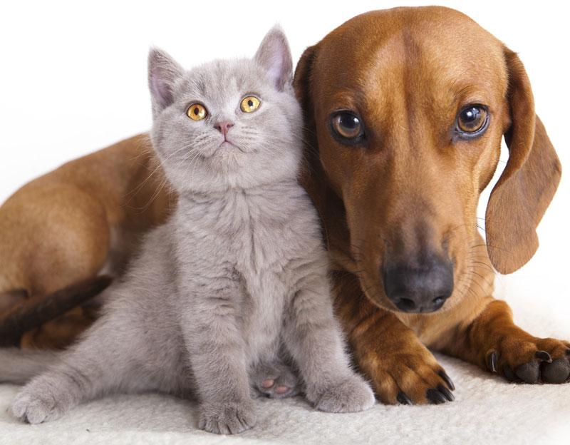 富山県のペットショップと保健所で殺処分される犬猫の数