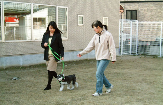 愛犬のしつけ方教室