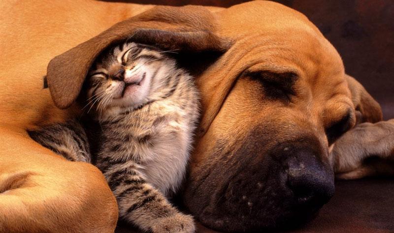 福井県のペットショップと保健所で殺処分される犬猫の数