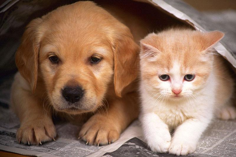 山梨県のペットショップと保健所で殺処分される犬猫の数