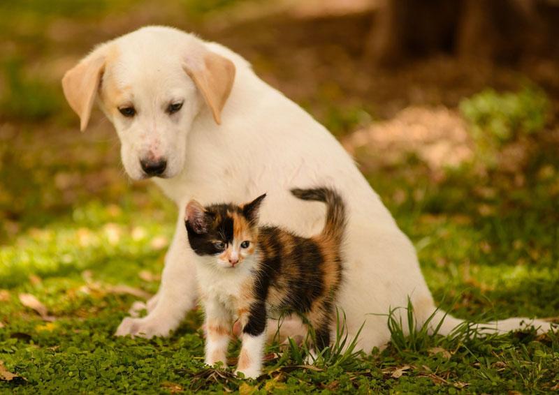 岐阜県のペットショップと保健所で殺処分される犬猫の数
