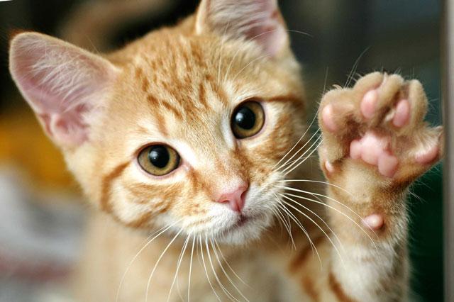 岐阜県動物愛護センター 無料の不妊去勢手術で地域猫活動を応援