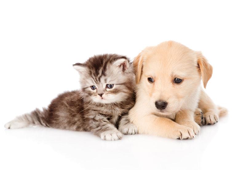 長野県のペットショップと保健所で殺処分される犬猫の数