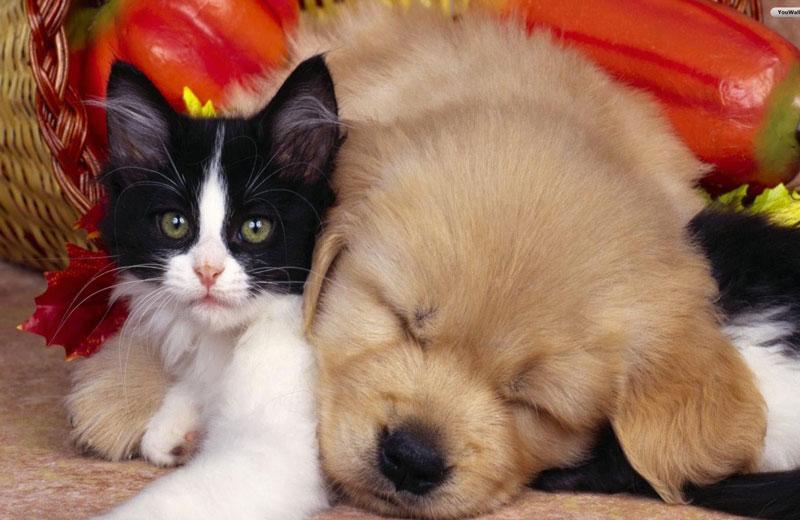 静岡県のペットショップと保健所で殺処分される犬猫の数