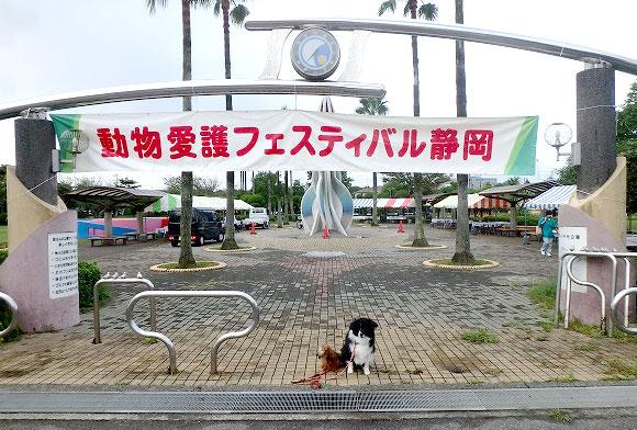 動物愛護フェスティバルの開催