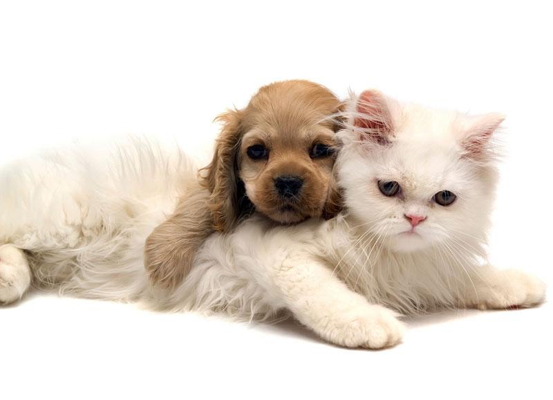 愛知県のペットショップと保健所で殺処分される犬猫の数