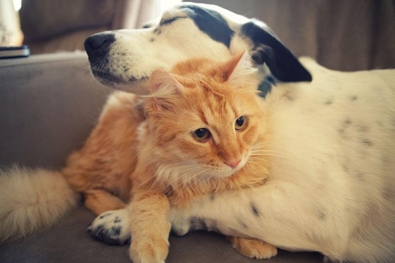 三重県で犬や猫を飼うならペットショップではなく譲渡会・里親探しがおすすめ