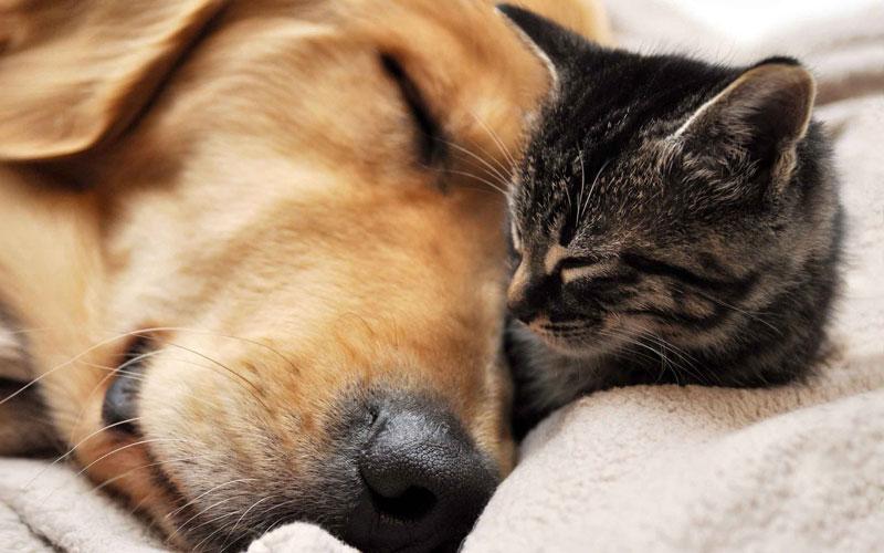 滋賀県で犬や猫を飼うならペットショップではなく譲渡会・里親探しがおすすめ