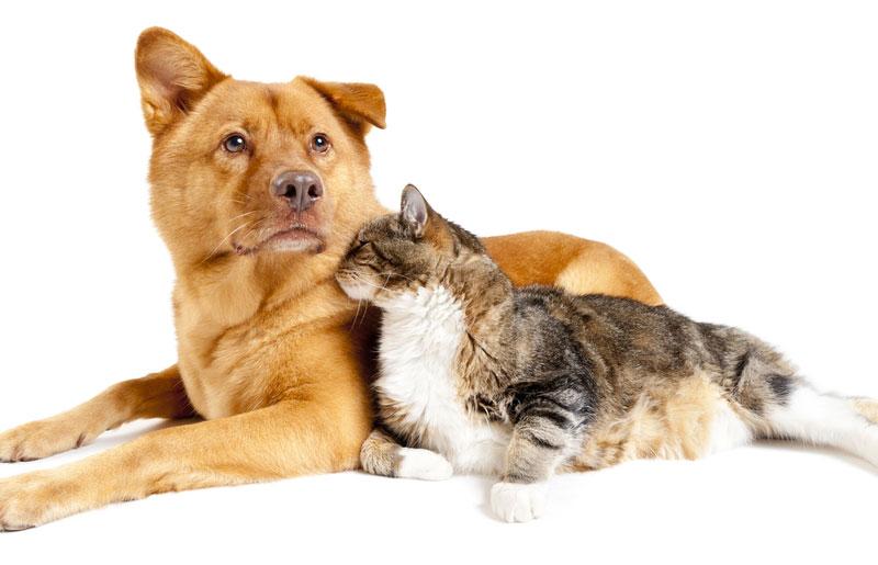 京都府で犬や猫を飼うならペットショップではなく譲渡会・里親探しがおすすめ