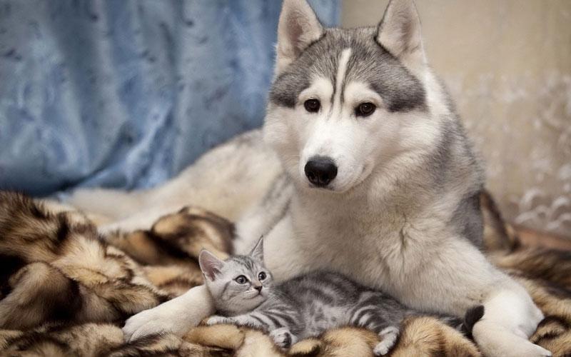 大阪府で犬や猫を飼うならペットショップではなく譲渡会・里親探しがおすすめ