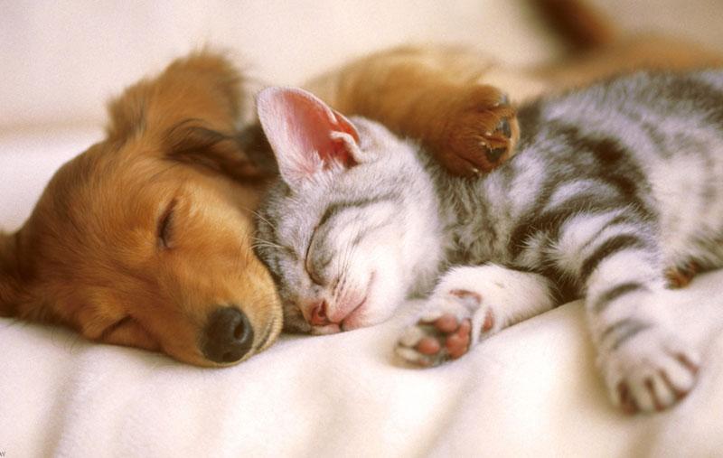 兵庫県で犬や猫を飼うならペットショップではなく譲渡会・里親探しがおすすめ