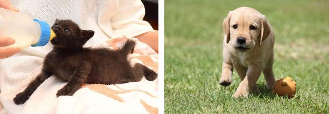 兵庫動物愛護センターの子犬子猫の飼い主捜し応援プロジェクト