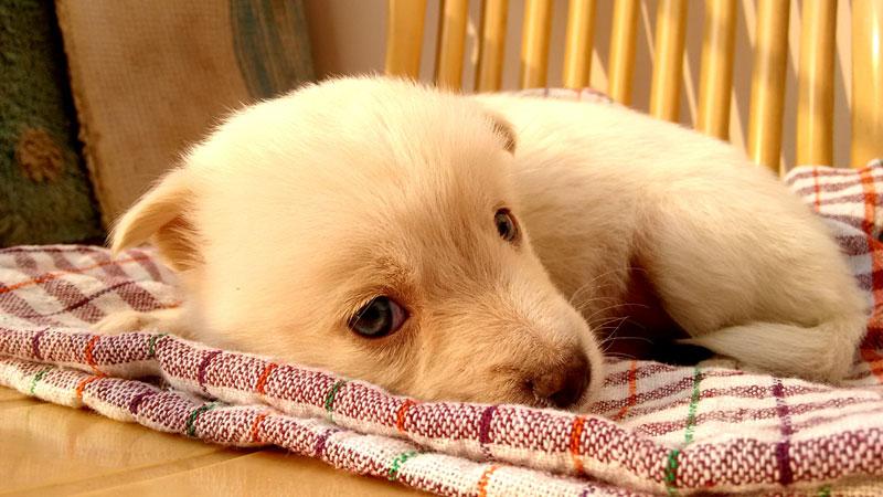 奈良県で犬や猫を飼うならペットショップではなく譲渡会・里親探しがおすすめ