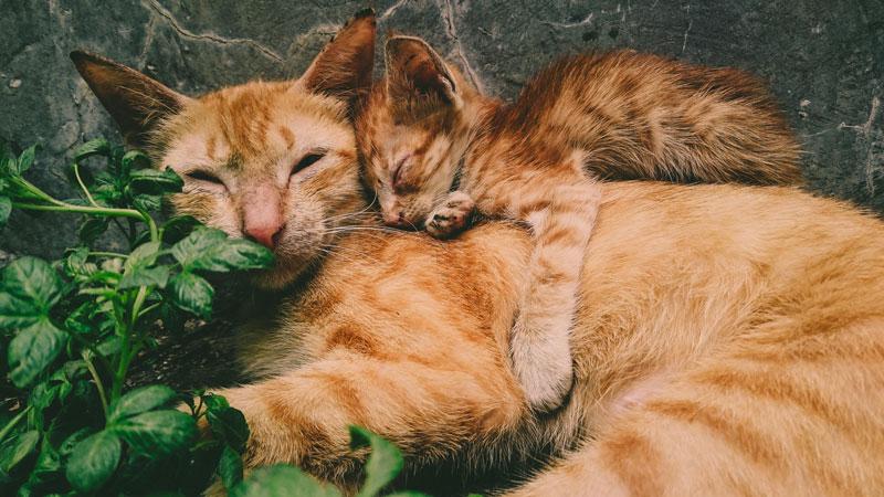 広島県 地域猫活動を推進