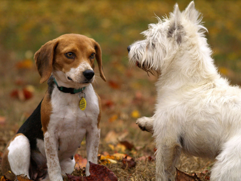岡山県で犬や猫を飼うならペットショップではなく譲渡会・里親探しがおすすめ