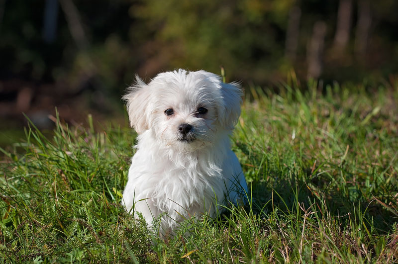 島根県で犬や猫を飼うならペットショップではなく譲渡会・里親探しがおすすめ
