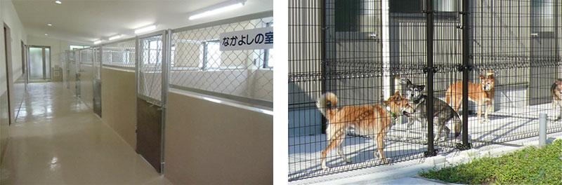 アミティエは理想的な動物愛護センター