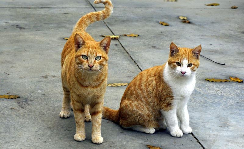 鳥取県で犬や猫を飼うならペットショップではなく譲渡会・里親探しがおすすめ