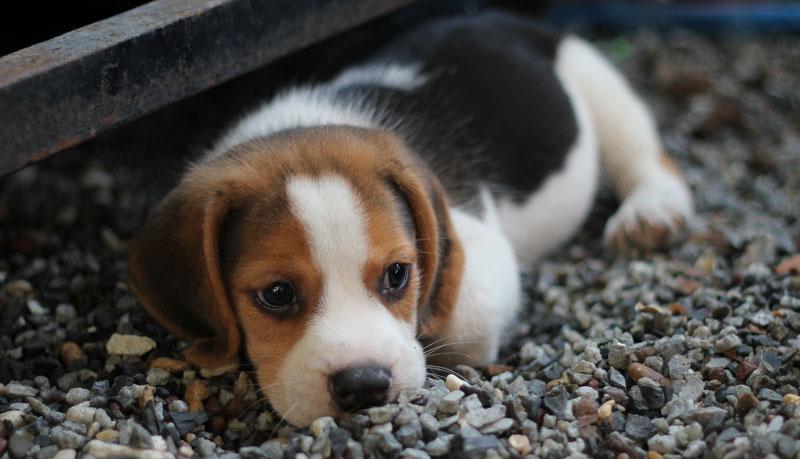 山口県で犬や猫を飼うならペットショップではなく譲渡会・里親探しがおすすめ