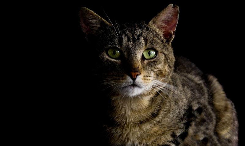 愛媛県で犬や猫を飼うならペットショップではなく譲渡会・里親探しがおすすめ