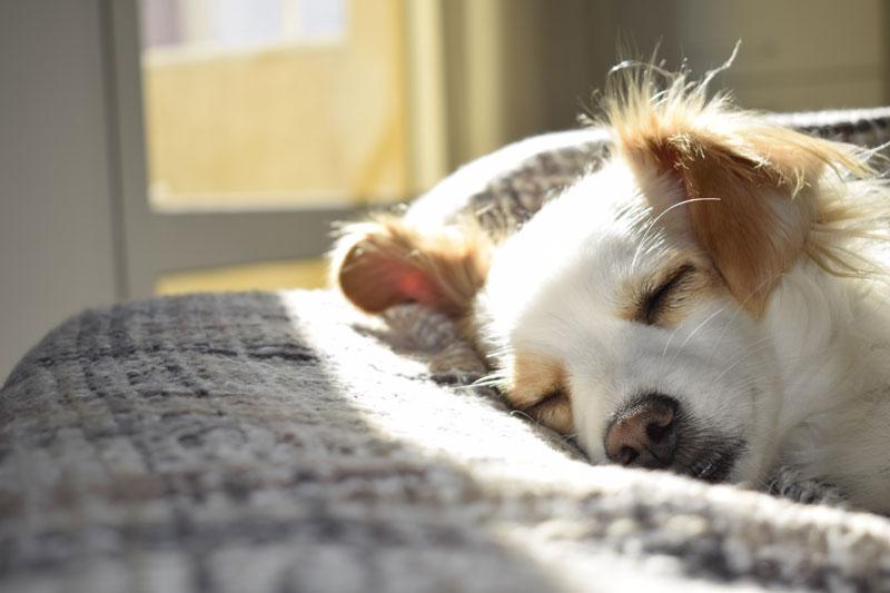 香川県で犬や猫を飼うならペットショップではなく譲渡会・里親探しがおすすめ