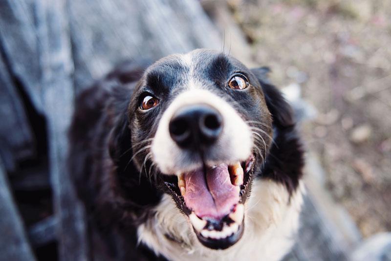 徳島県で犬や猫を飼うならペットショップではなく譲渡会・里親探しがおすすめ