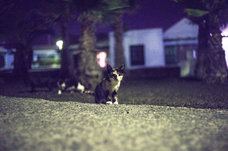 高島の野良猫狩り。32匹を即殺処分した長崎市