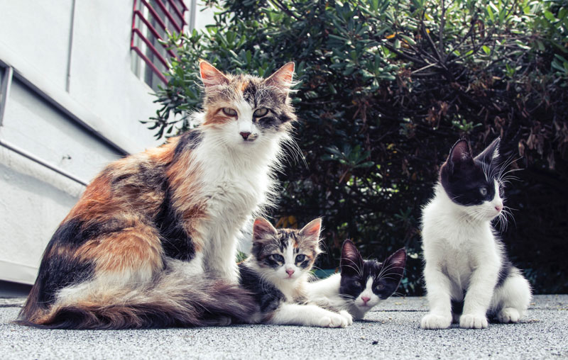 長崎県で犬や猫を飼うならペットショップではなく譲渡会・里親探しがおすすめ