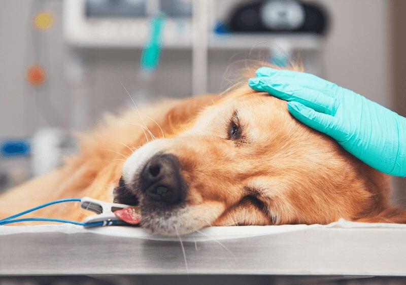 「嫌われる動物愛護センター」で始まった熊本市の犬の殺処分ゼロ