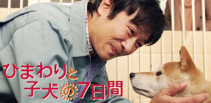 映画「ひまわりと子犬の7日間」の舞台となった宮崎県