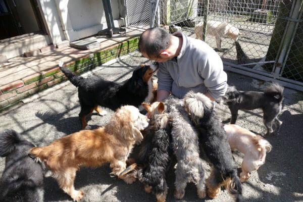 いぬ乃湯温泉動物病院では捨てられたペットを治療し里親を探している
