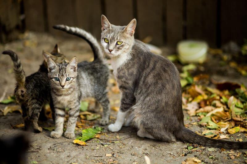 鹿児島県で犬や猫を飼うならペットショップではなく譲渡会・里親探しがおすすめ
