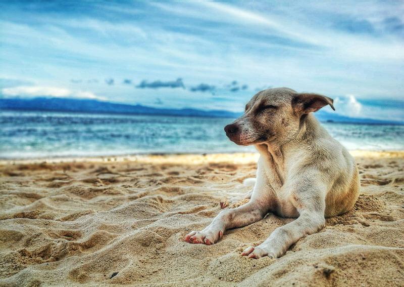 沖縄県で犬や猫を飼うならペットショップではなく譲渡会・里親探しがおすすめ